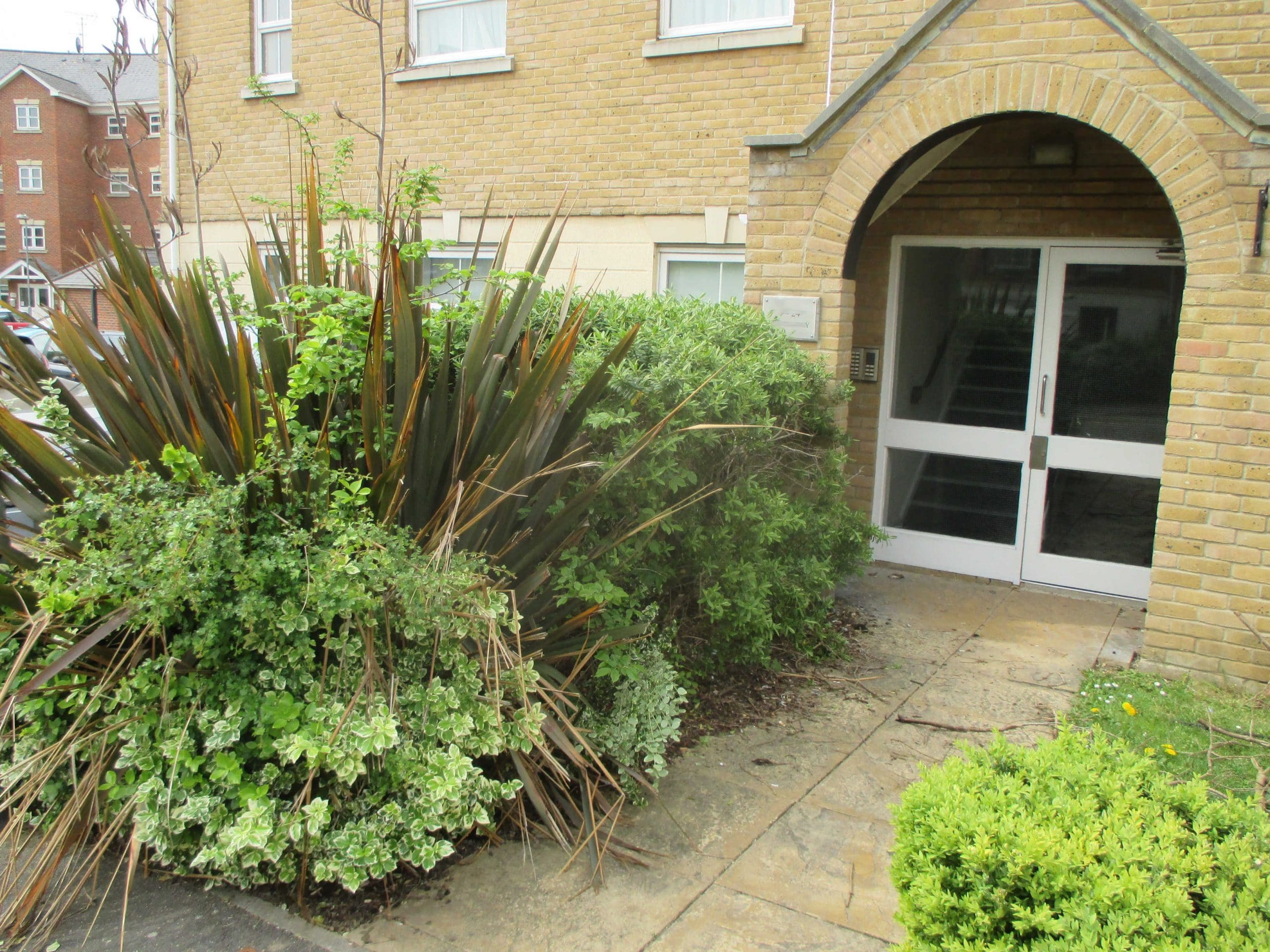 These plants were overgrown and required expert knowledge to prune them properly.
